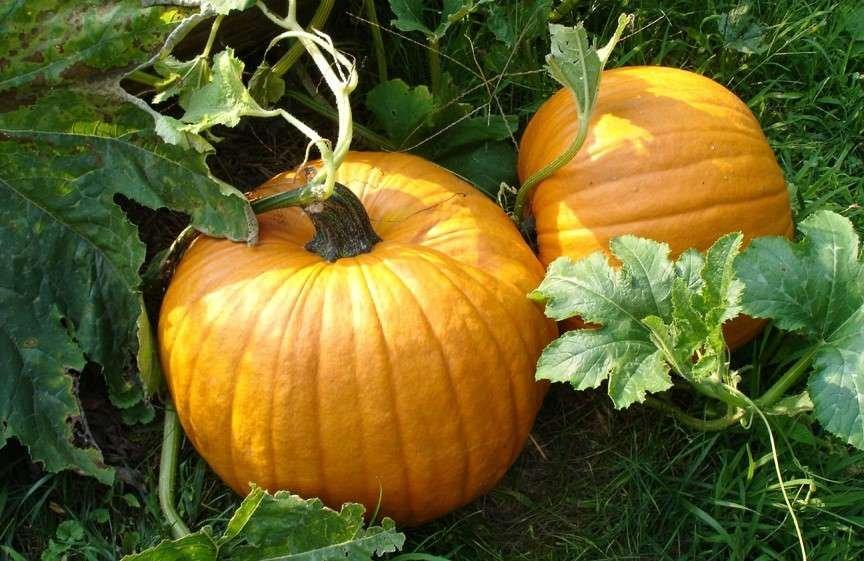 Pumpkin 'Orange Smoothie'