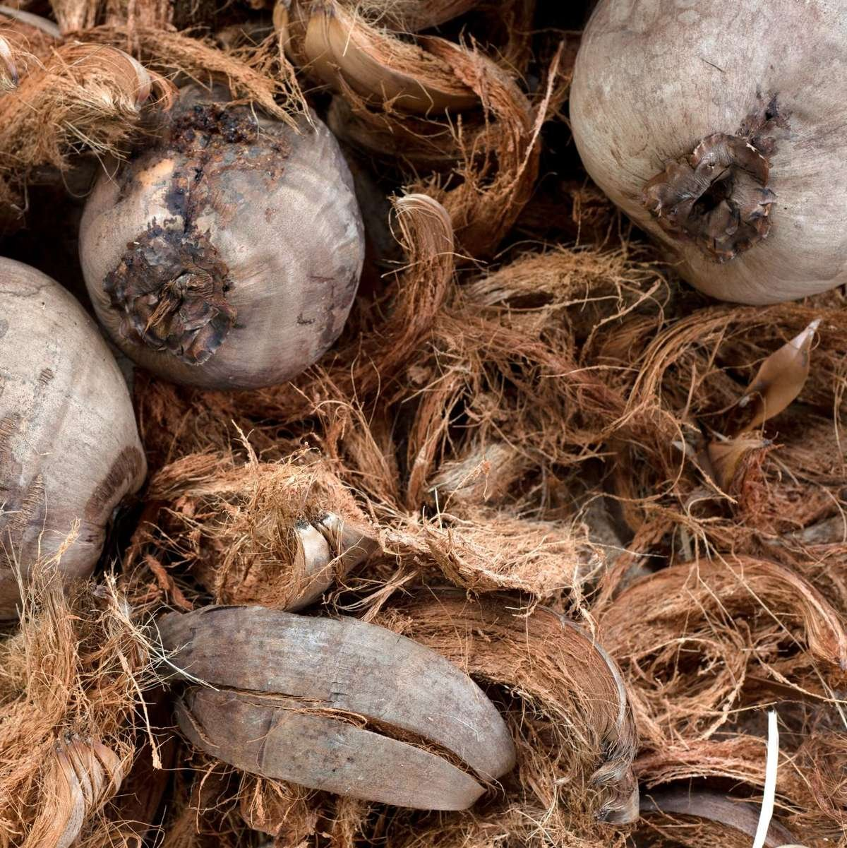 Coir from Coconuts