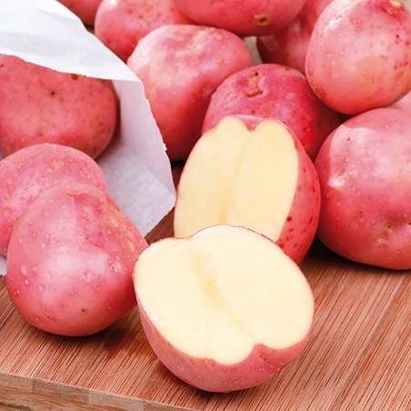 Cherry Red Potato