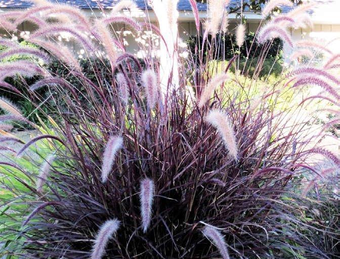 Drought Tolerant Plants — Green Acres Nursery & Supply