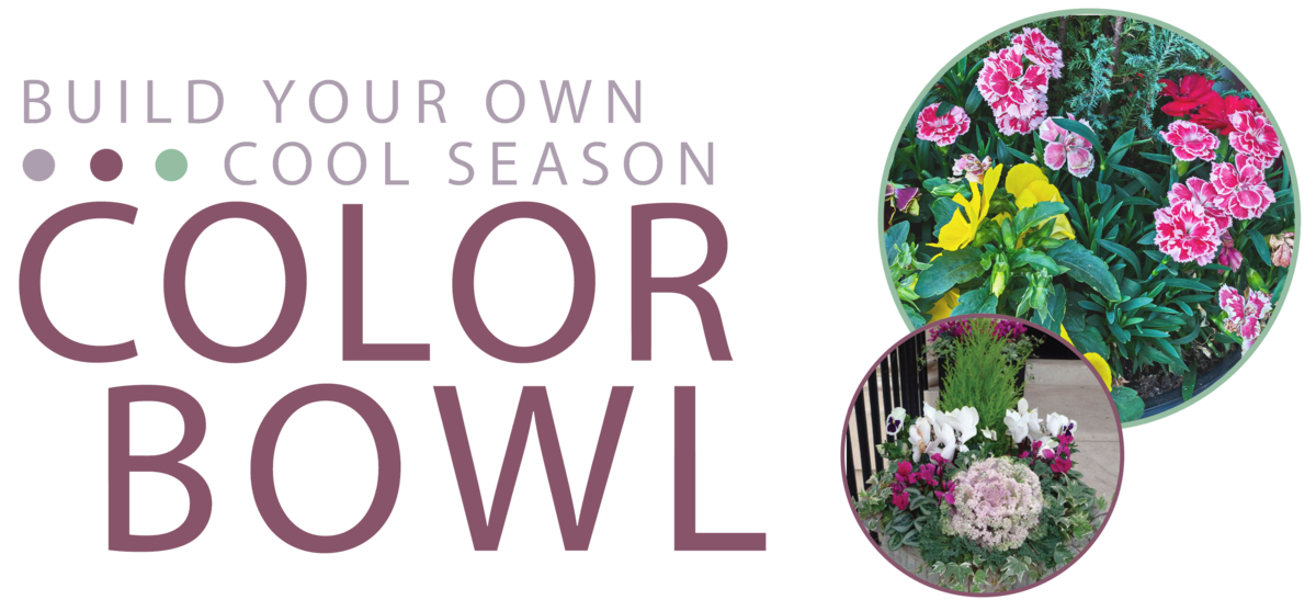 Build Your Own Cool Season Color Bowl
