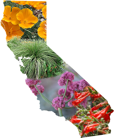 Plants in the shape of California
