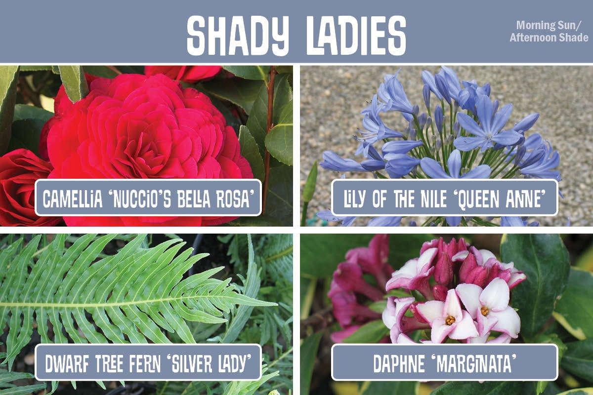 Shady Ladies graphic