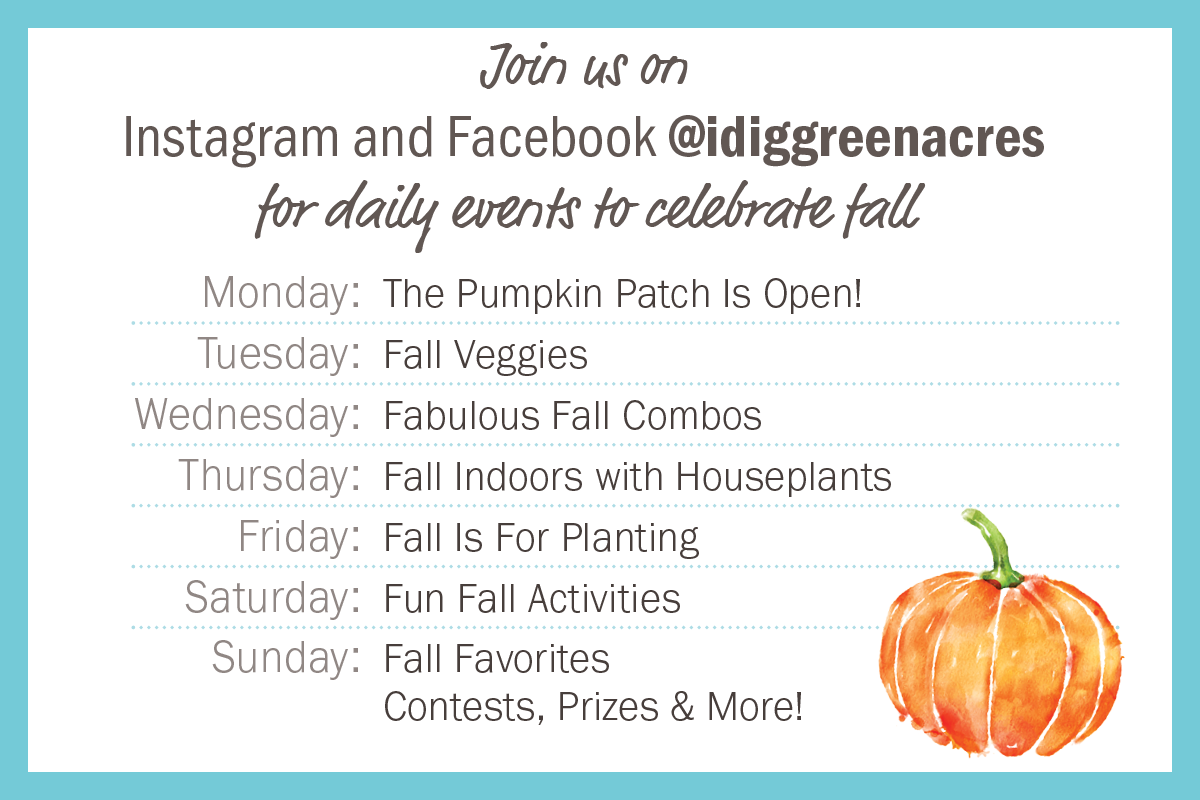 Daily events to celebrate fall