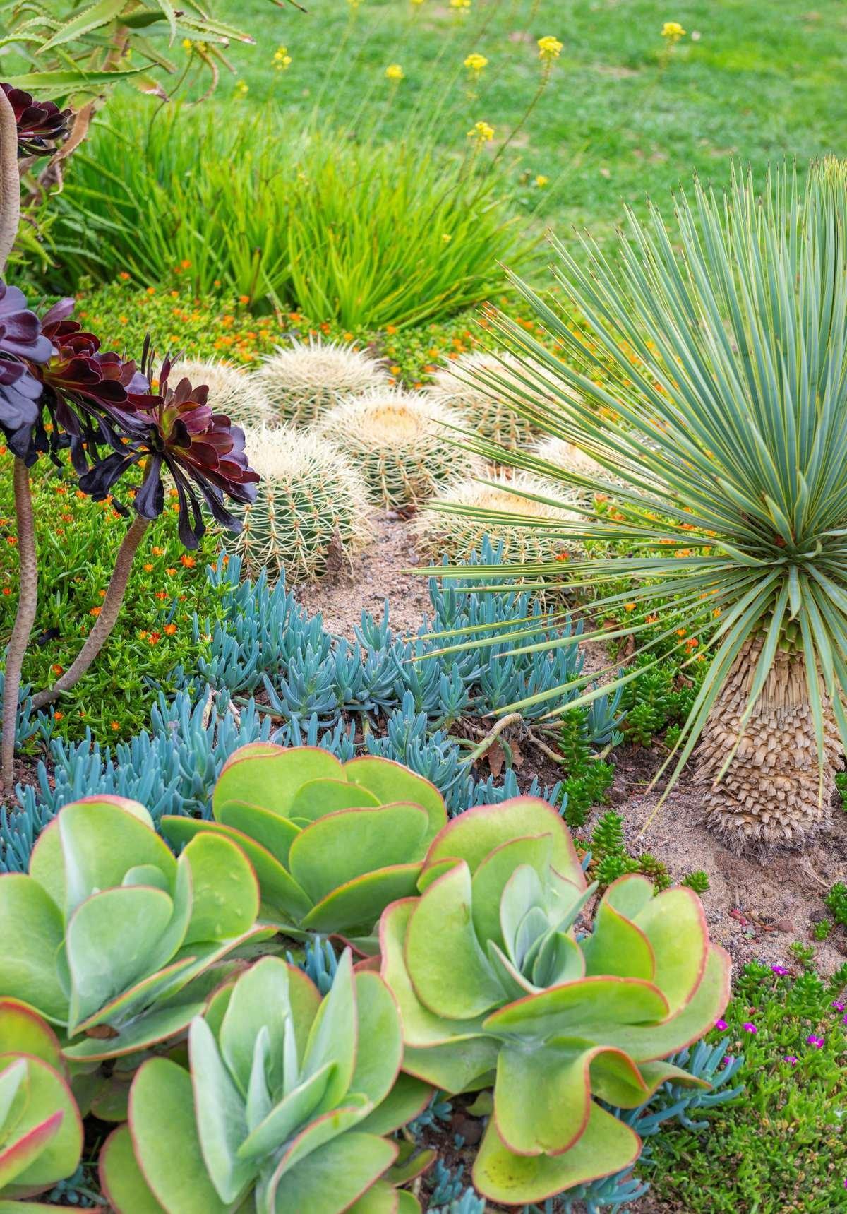 Succulents in a Landscape