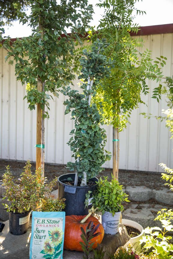 Trees and shrubs for fall planting
