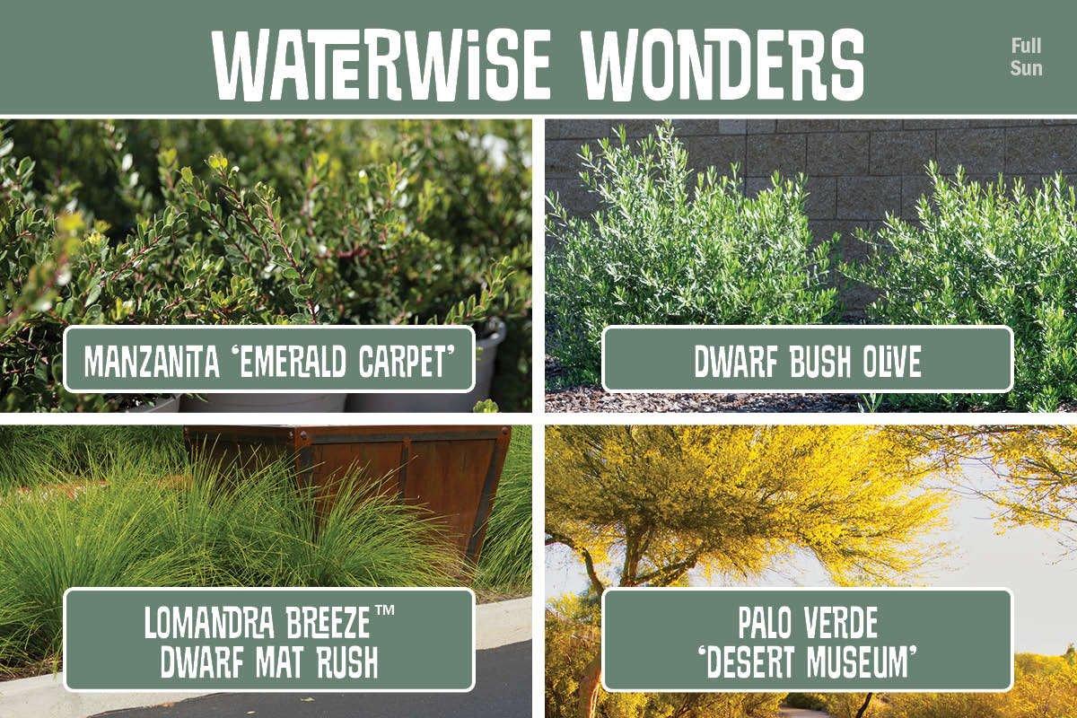 Waterwise Wonders graphic