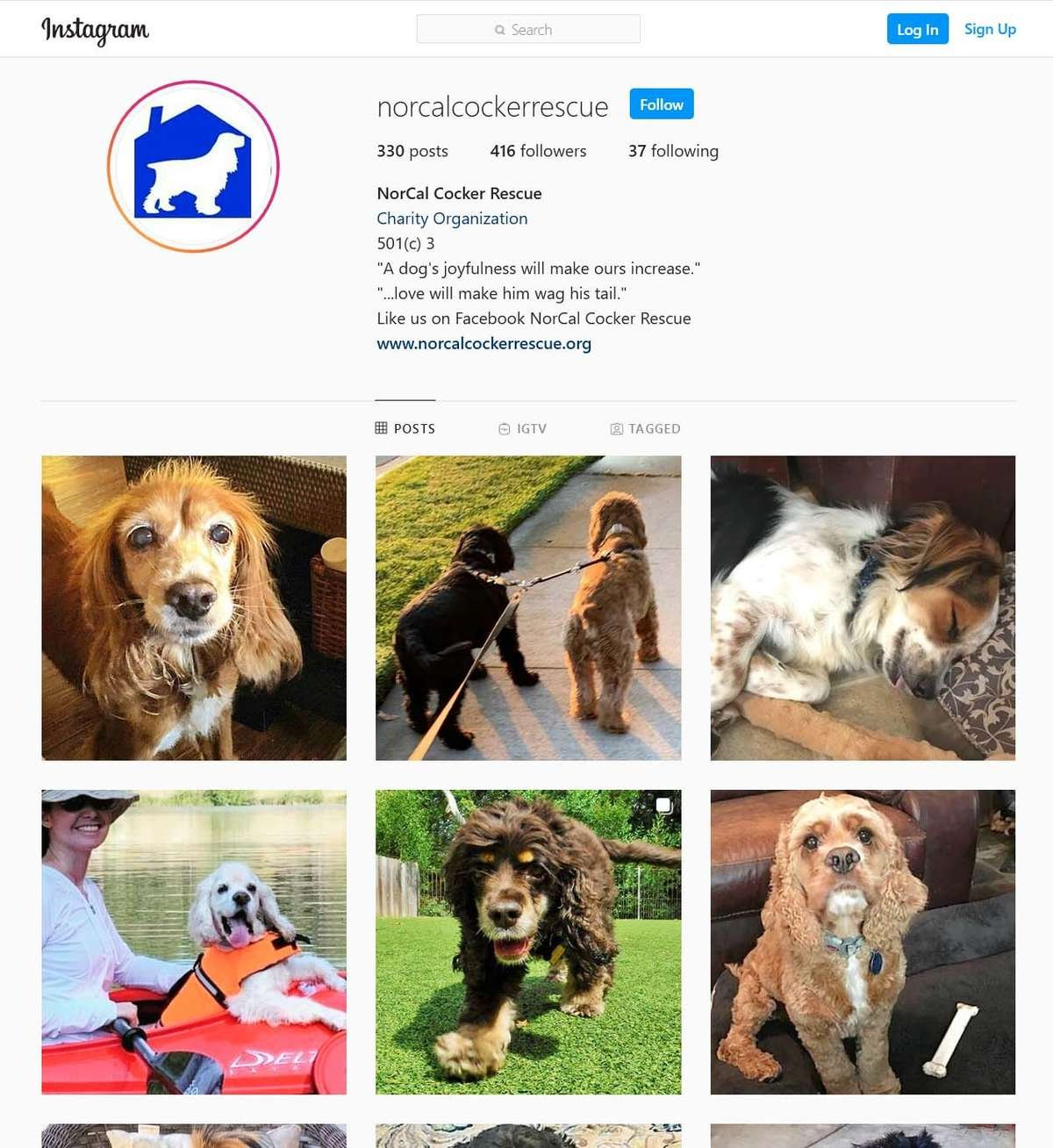 NorCal Cocker Rescue Instagram