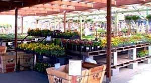 Auburn - Green Acres Nursery and Supply at Eisley's