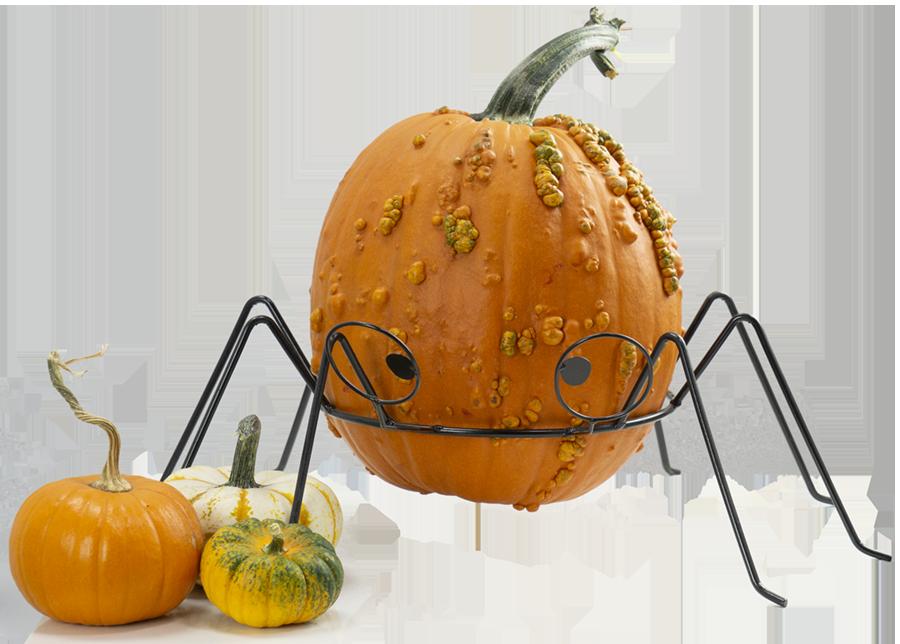 Pick your Perfect Pumpkin