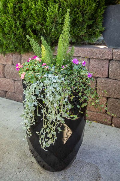 Black Pot with Asparagus Fern, Impatiens, and Dichondra
