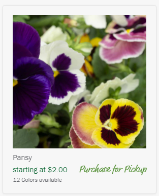 image of pansies to Purchase for Pickup