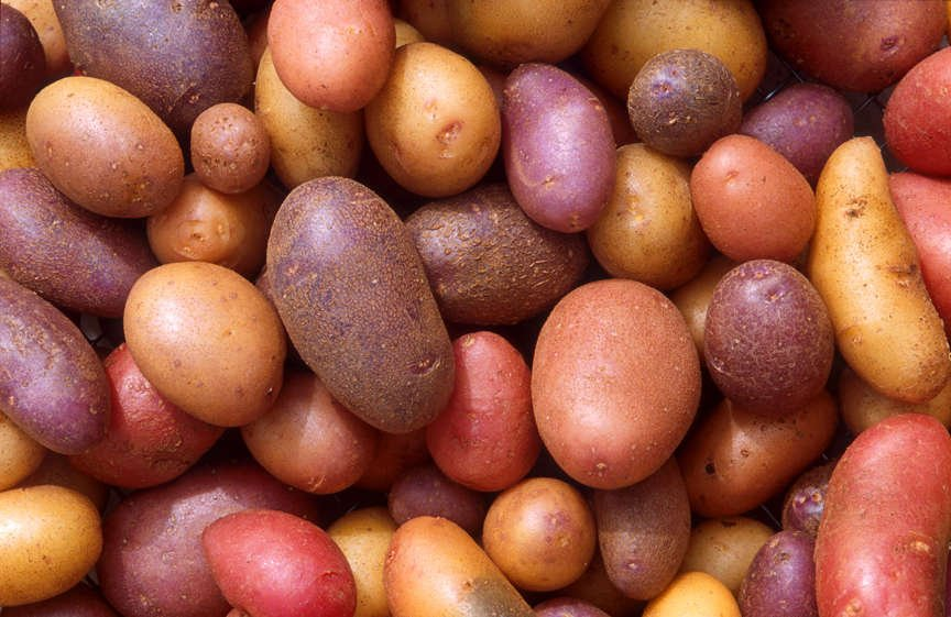 Multiple Varieties of Potatoes