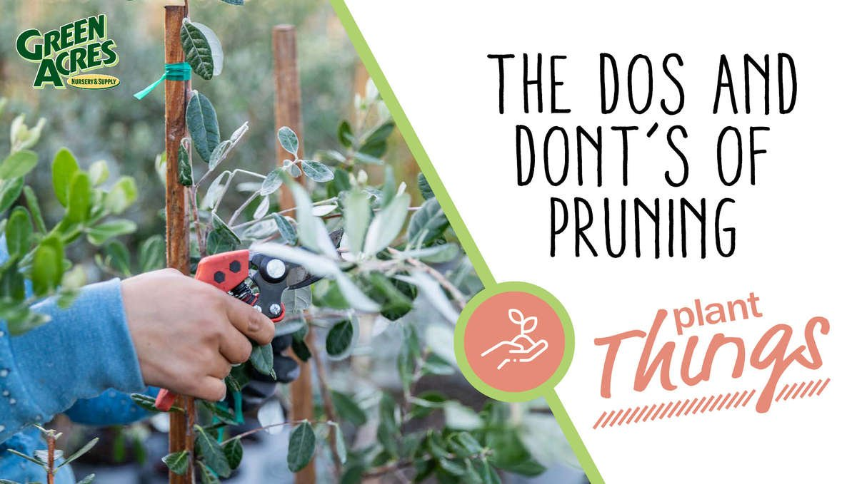 The Dos and Don'ts of Pruning thumbnail graphic