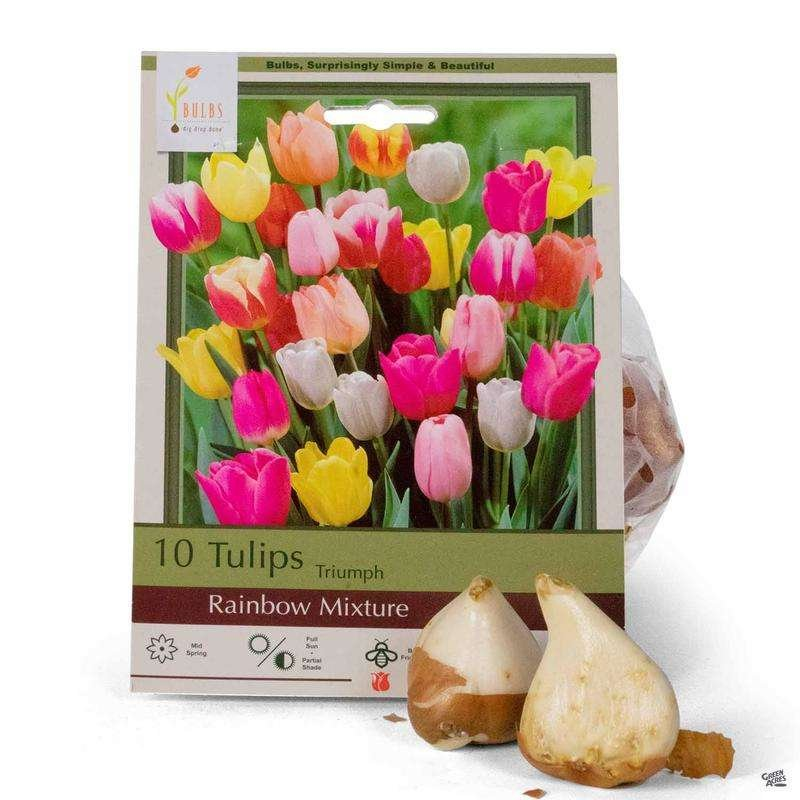 Package of Tulip Bulbs