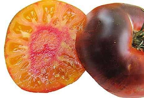 Wild Boar Tomato: Lucid Gem