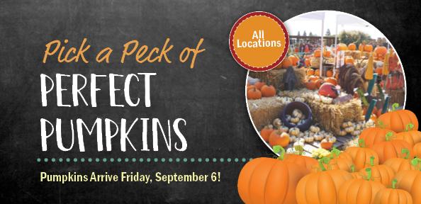 Pick a Peck of Perfect Pumpkins