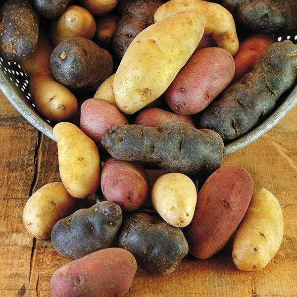 Harvest Blend Potato