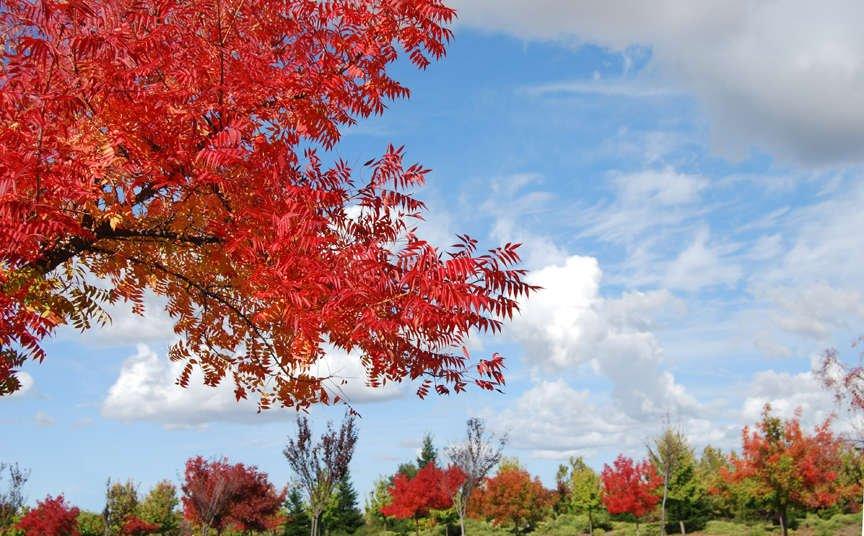 Colorful fall foliage and blue sky