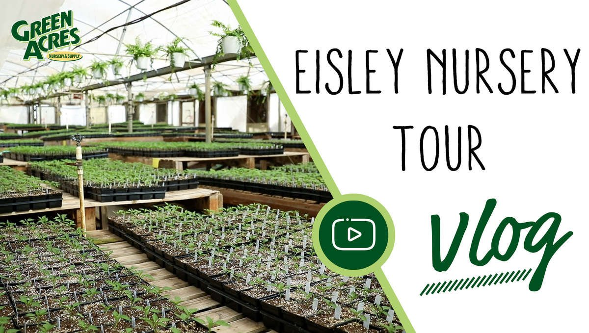 Eiley growing greenhouse