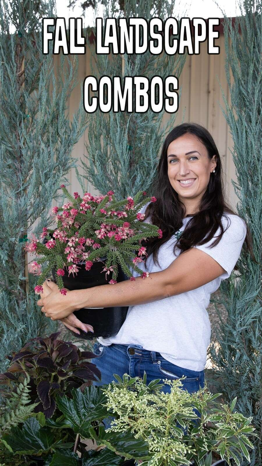 Fall Landscape Combos Julie holding Grevillea