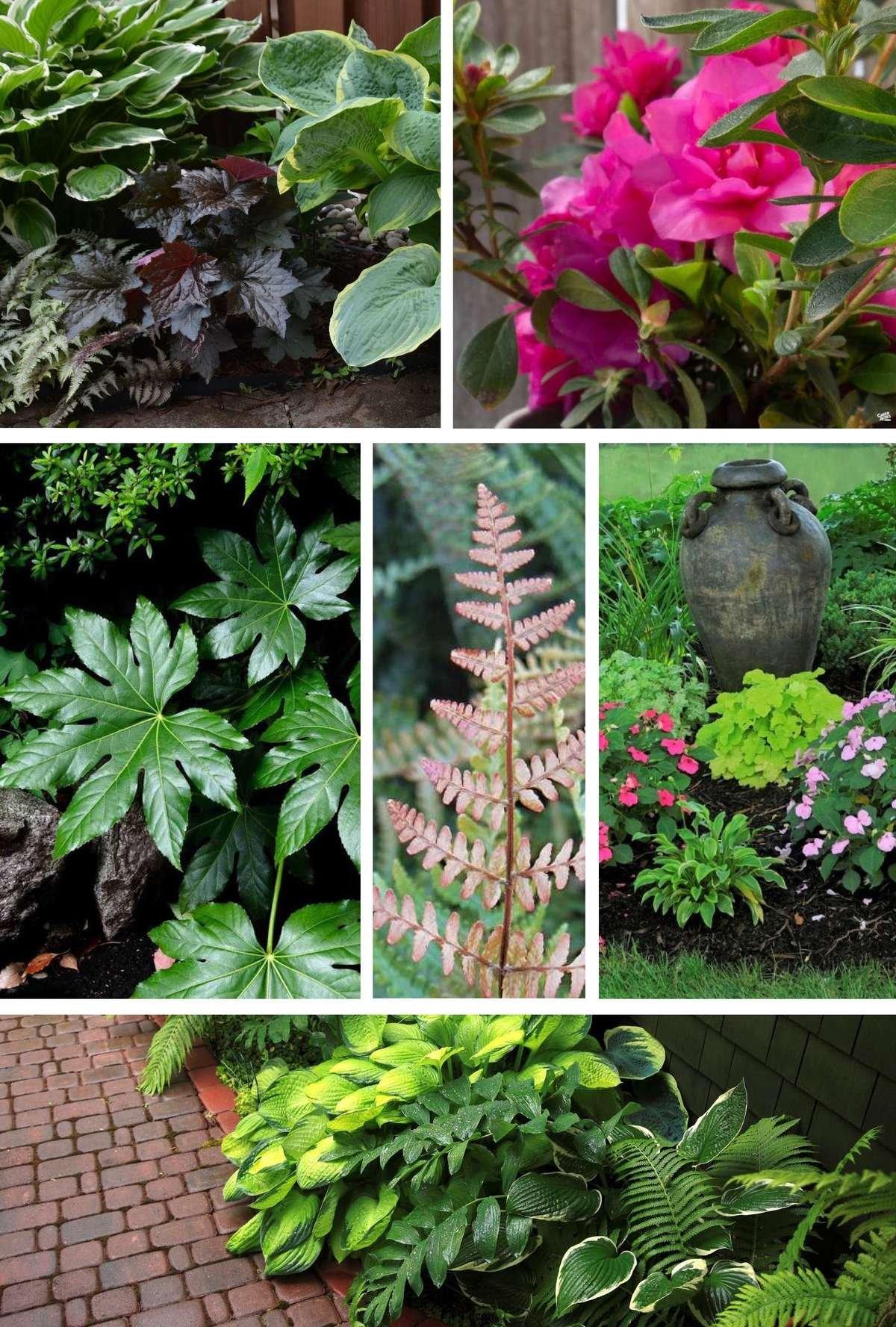 Shady Garden Collage