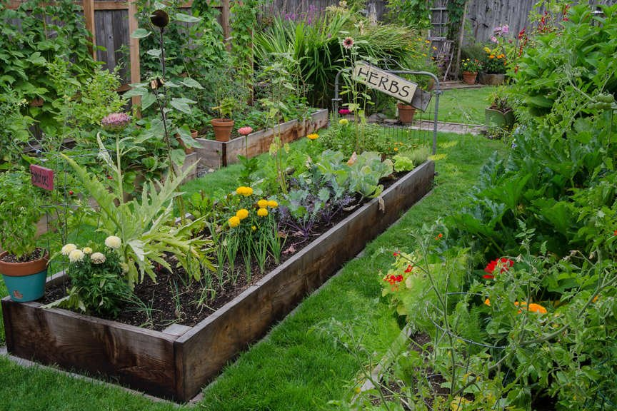 Raised Garden Beds with veggies and flowers