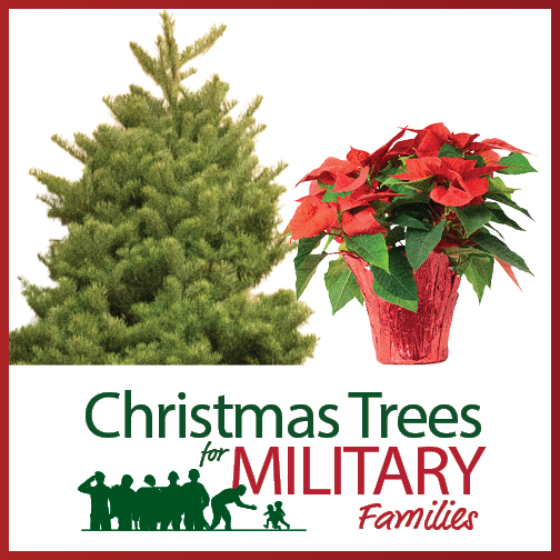 one 6 foot Noble Fir and one 6 inch poinsettia