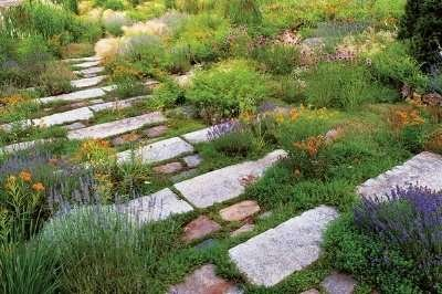 close up of plants near outdoor steps made of rocks