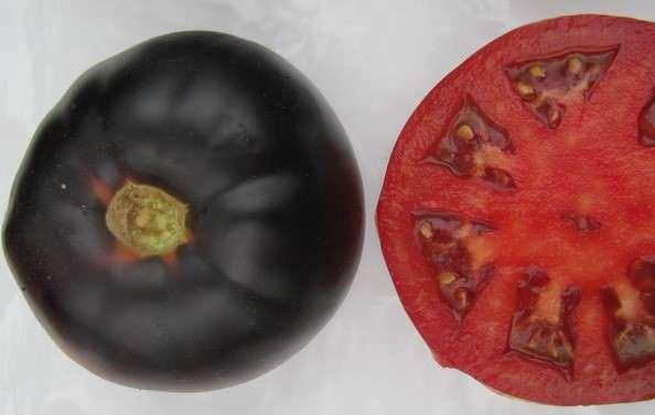 Wild Boar Tomato: Black Beauty
