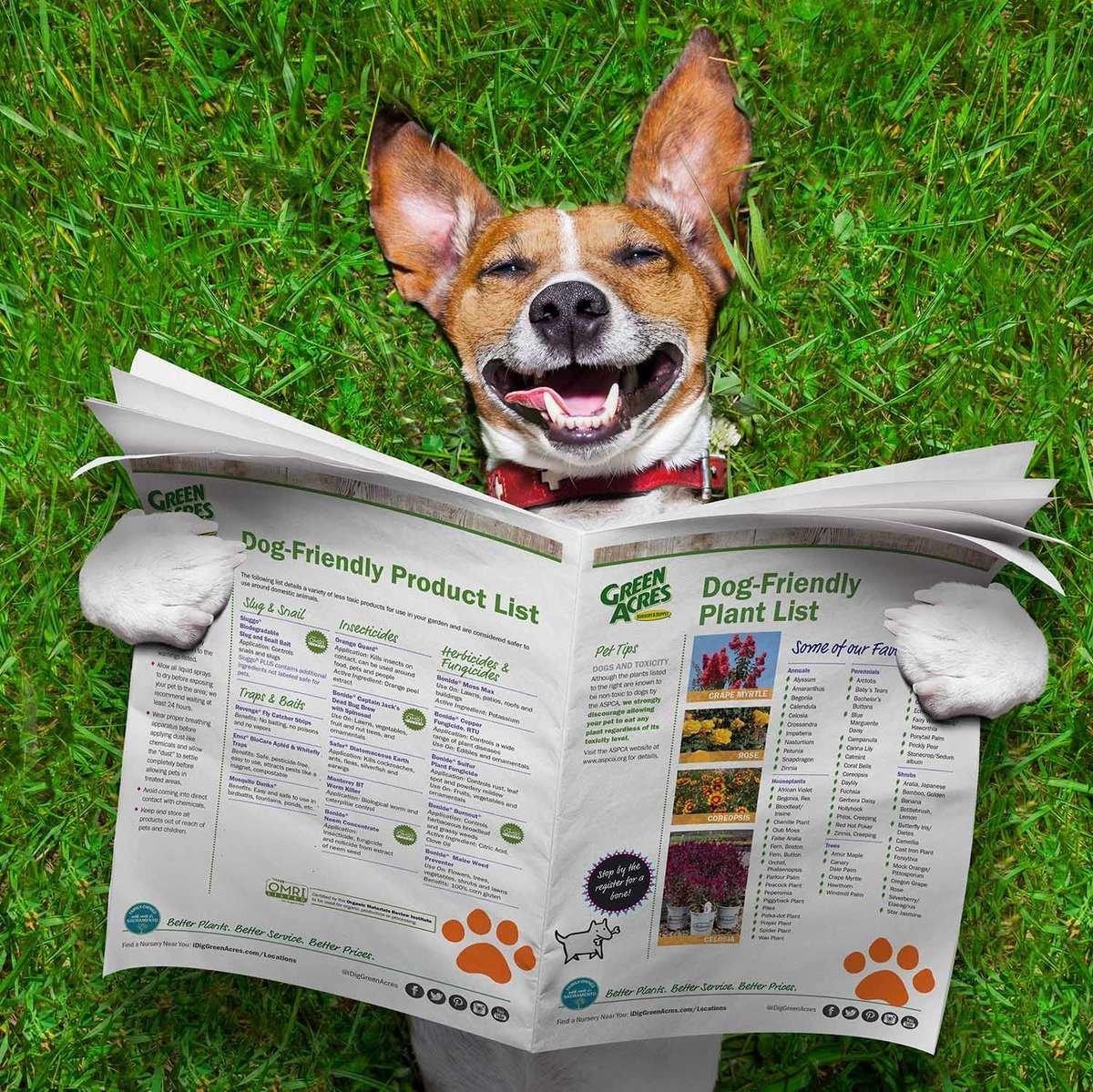dog reading dog-friendly handouts