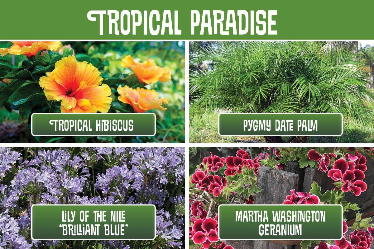 Tropical Paradise planting recipe