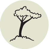 icon showing a sketch of a tree
