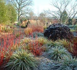 Spikey plants in a winter garden