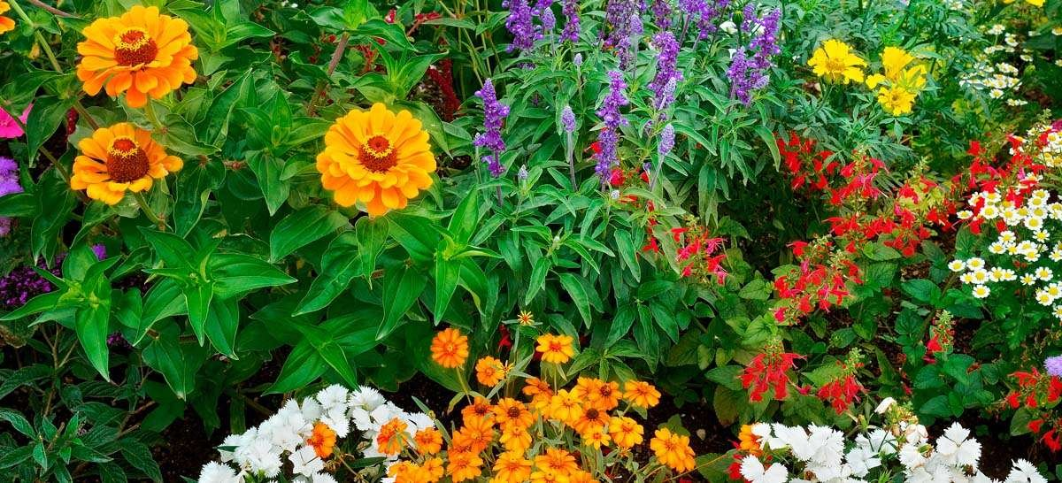Pollinator garden with brightly colored blooms
