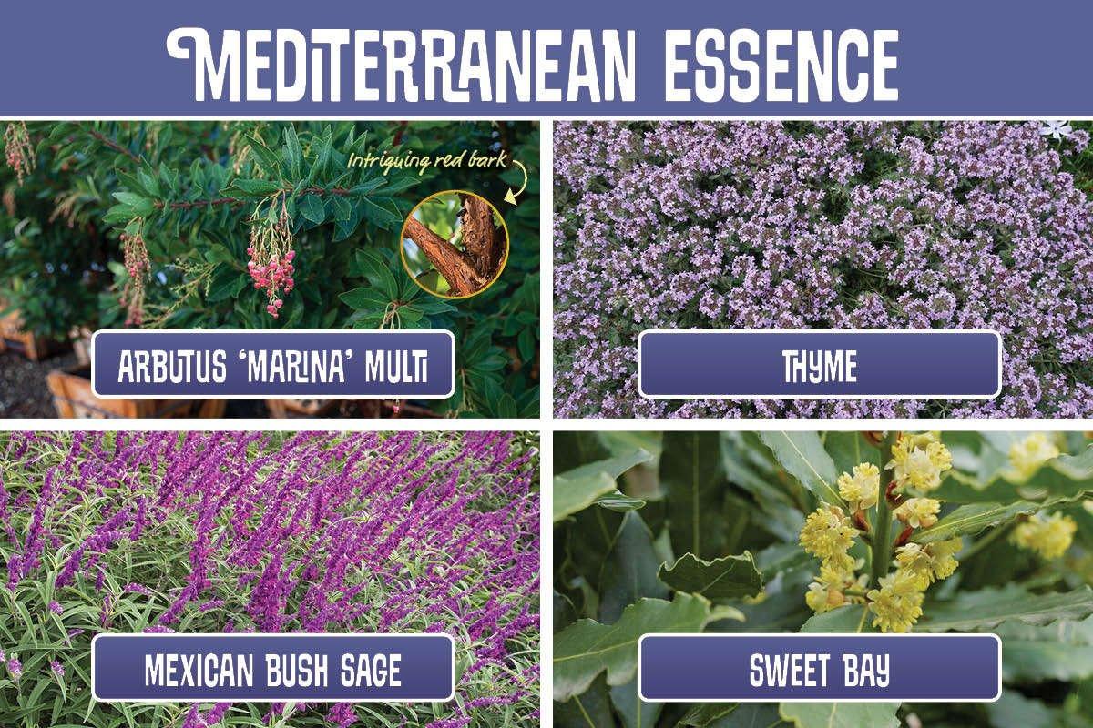 Mediterranean Essence graphic