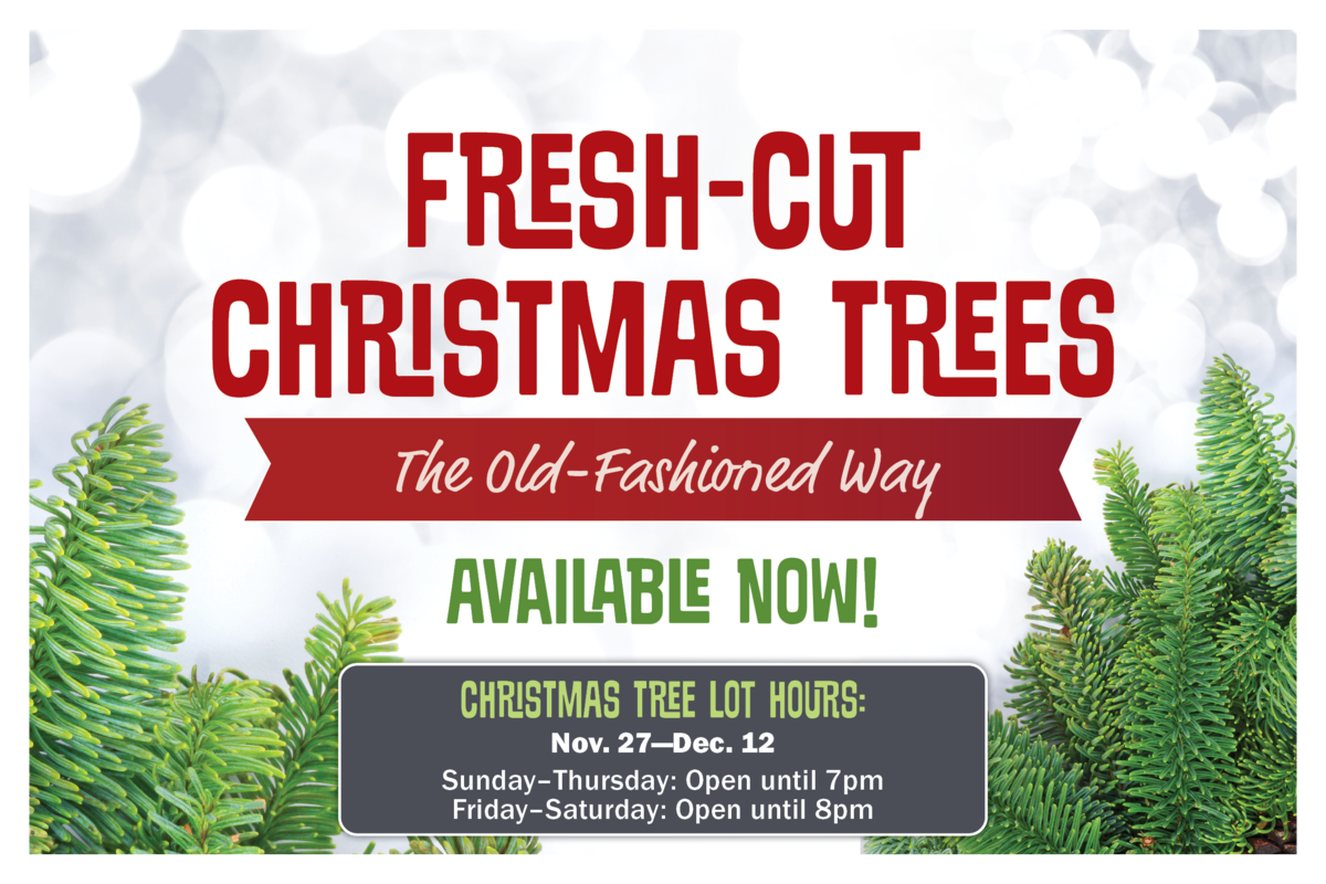 Fresh-Cut Christmas Trees Available Now