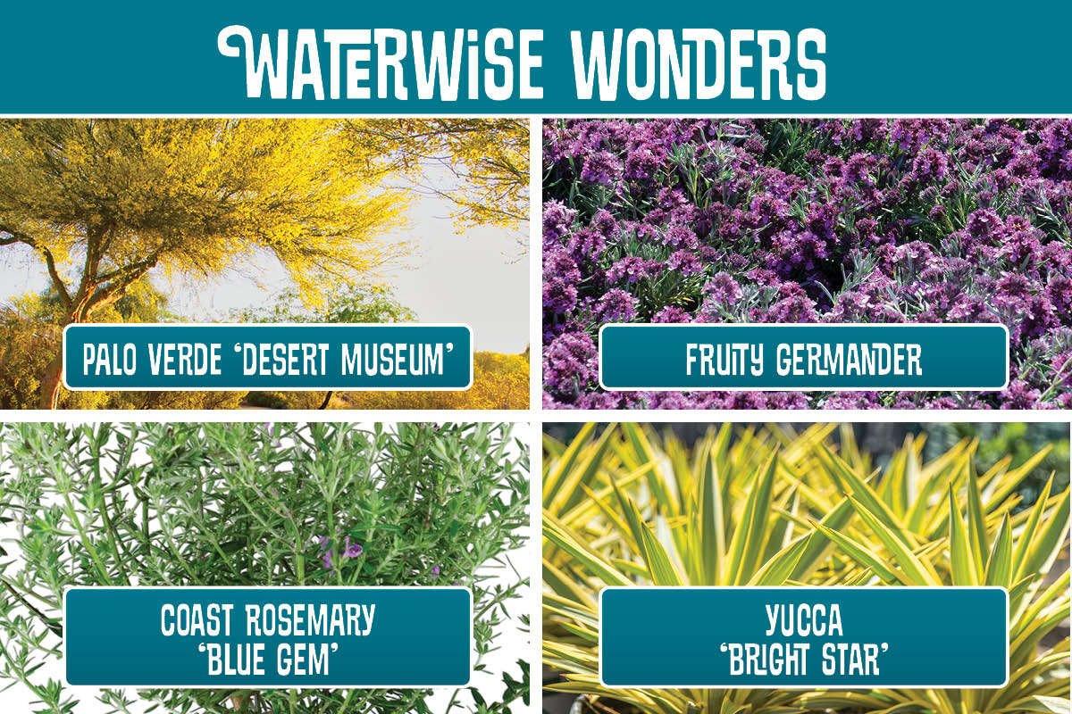 Waterwise Wonders planting recipe