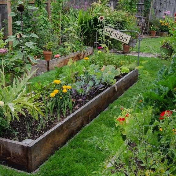 Raised bed veggie garden
