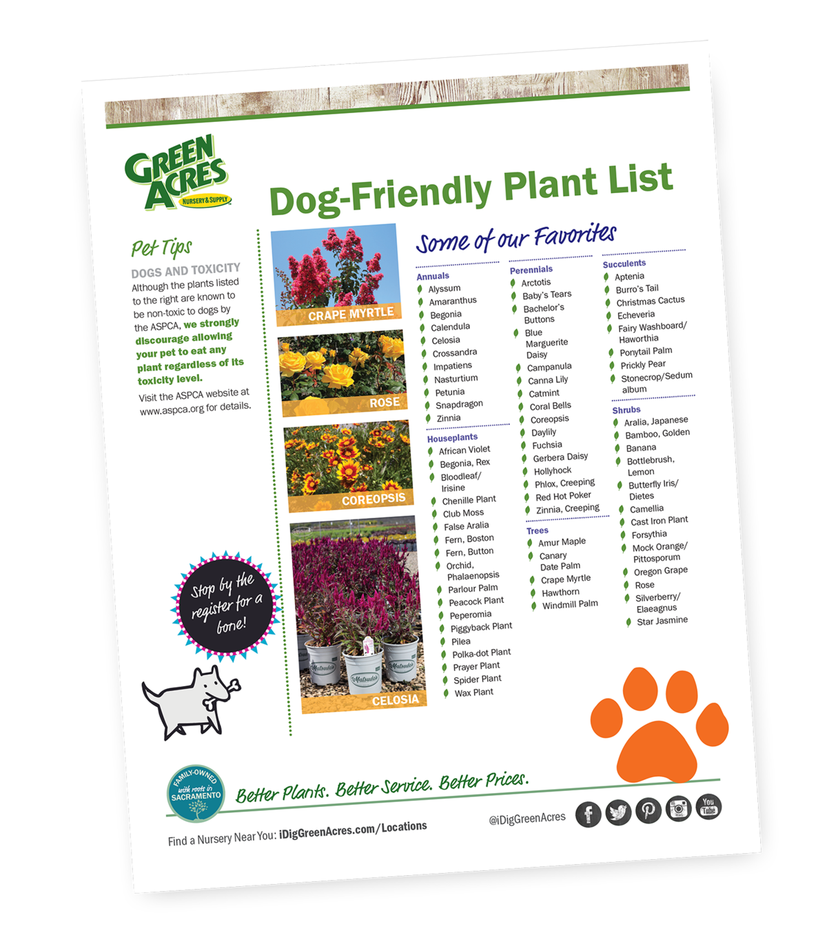 Graphic of Dog-Friendly Plant List
