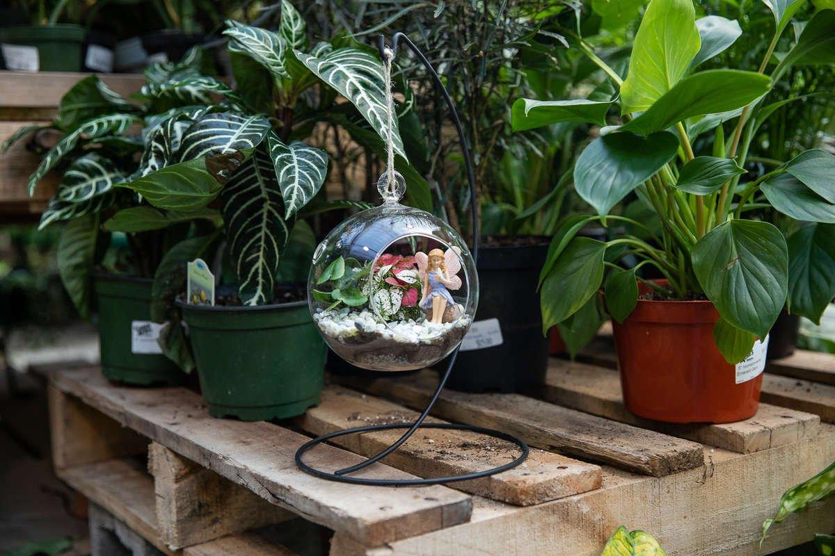 Create Class Fairy Garden Terrarium Green Acres Nursery Supply