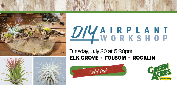 RSVP for Our Airplant Workshop