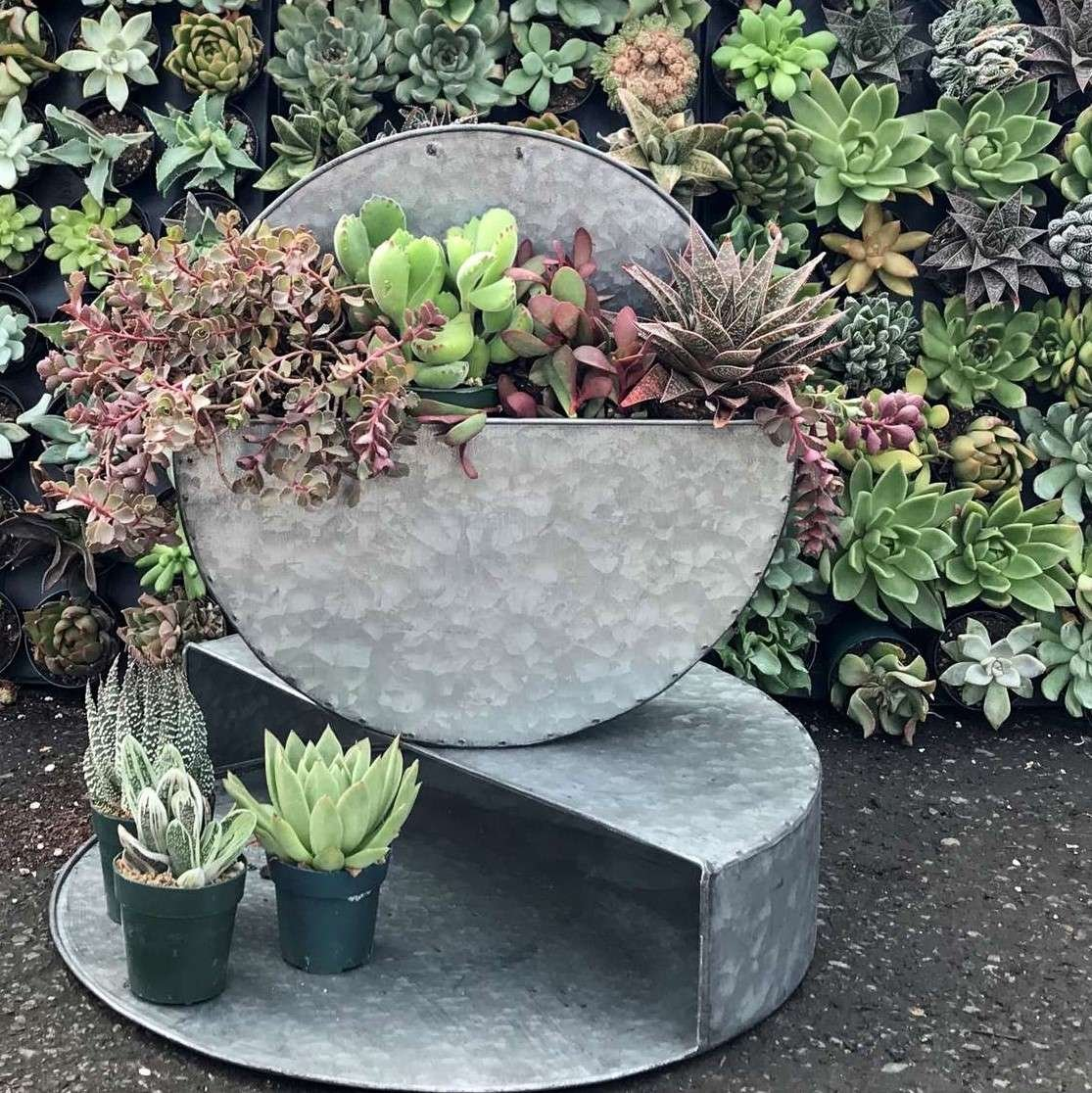 Succulents planted in a wall hanging