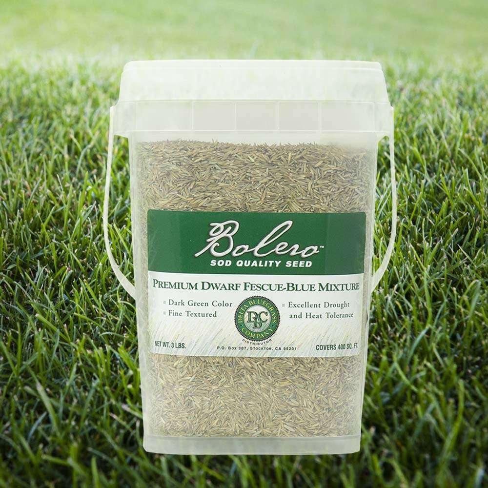 Sod Green Grass Yard with Bolero Sod Quality Seed