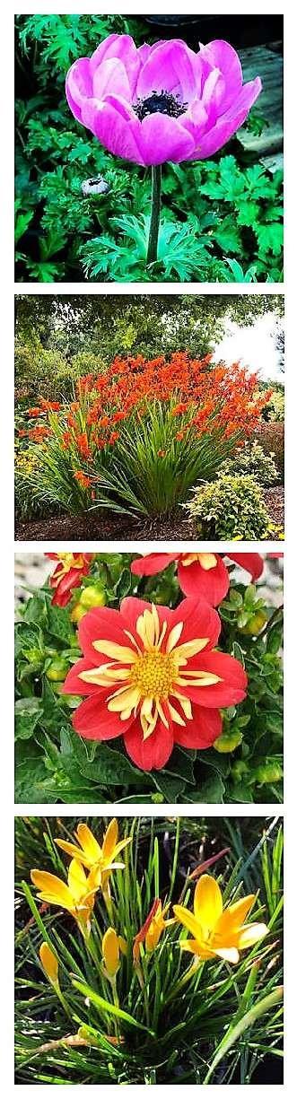 Summer-Blooming Bulbs