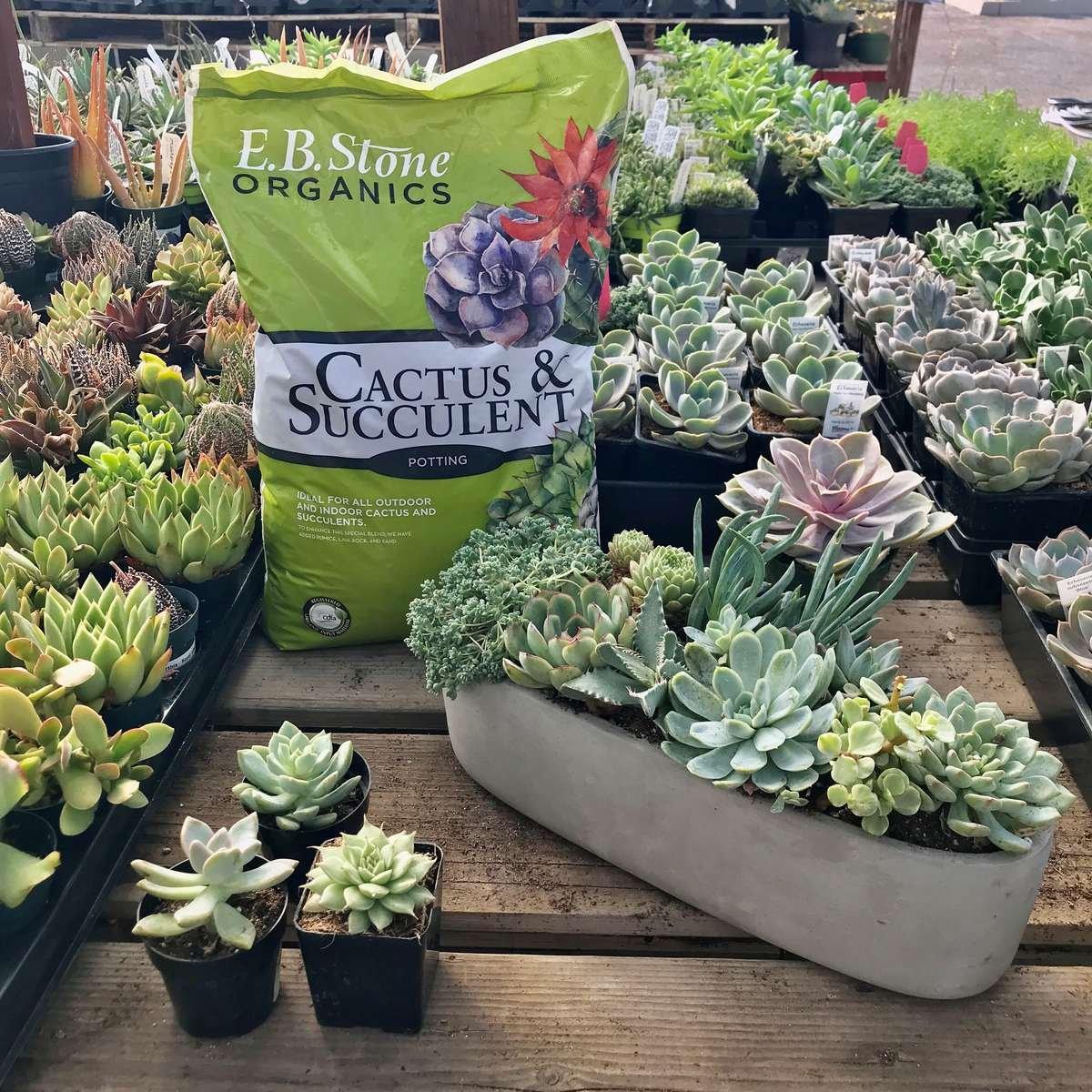 Succulent Bowl, Soil, Table of Succulents