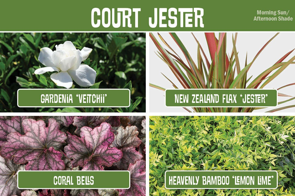 Plant Combination Gardenia, Flax, Coral Bells, Heavenly Bamboo