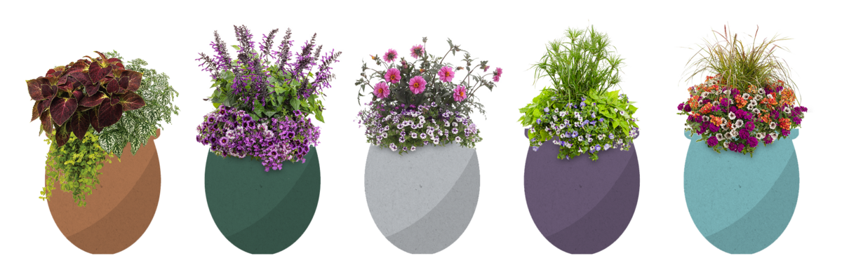 Color combos in pots