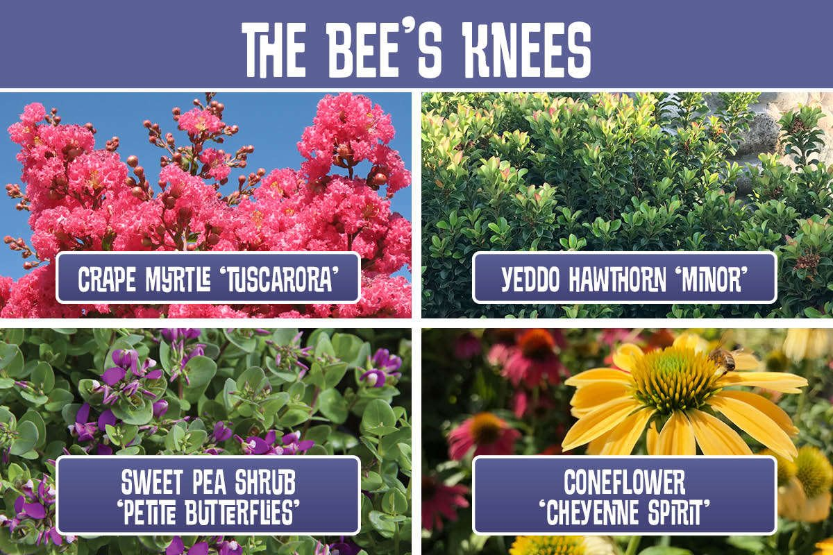 The Bee's Knees planting recipe
