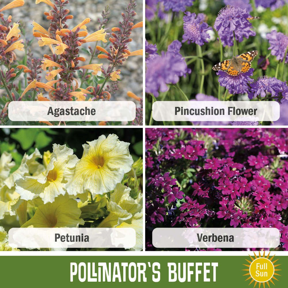 Image of the four plants in this recipe